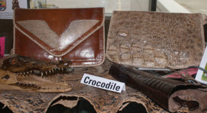 dodo_reptile-products